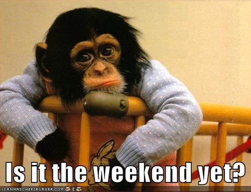 banana,cute,apes,weekend