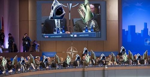 puns sharks NATO politics - 7853690112