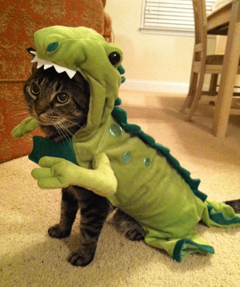 costume,pets,list,halloween,cute,dinosaurs,costumed critters