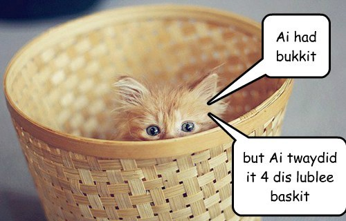 kitten,cute,lolspeak,bucket,basket