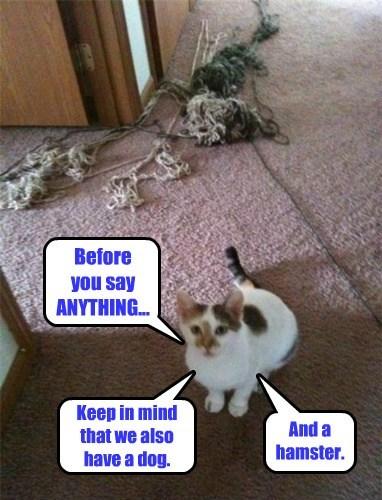 lying cute mess Cats - 7854466304