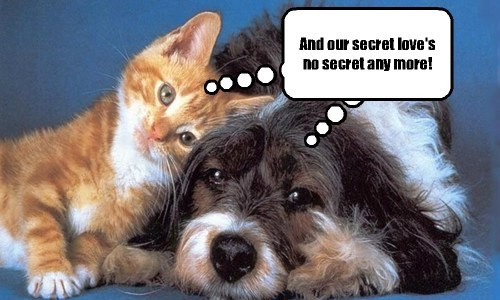 dogs diversity cute love Cats - 7854561792