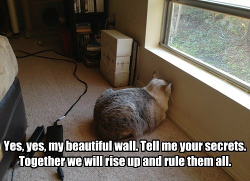 Yes, yes, my beautiful wall. Tell me your secrets. Together we will rise up and rule them all.
