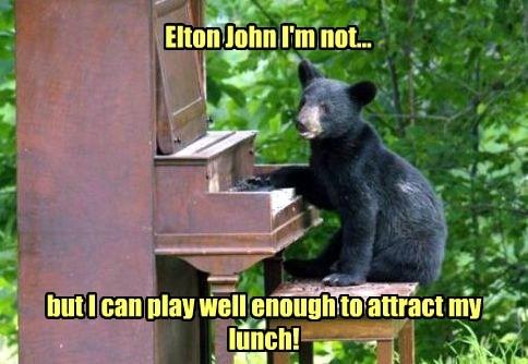 piano bears elton john food