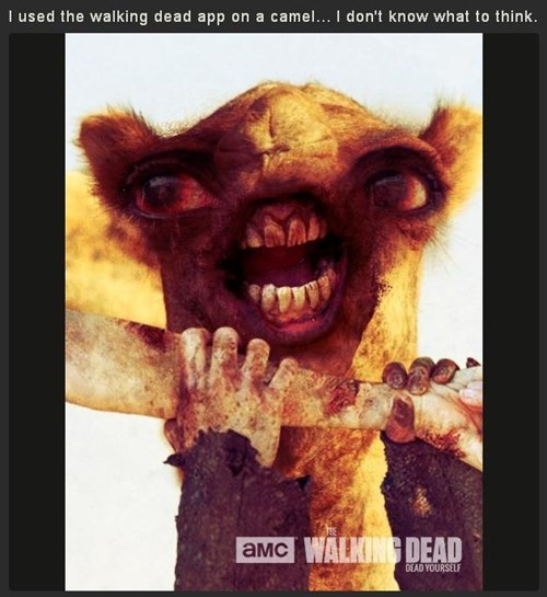 hump day camel The Walking Dead - 7856030464
