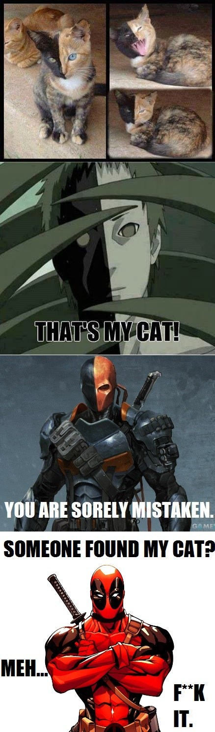 deadpool reframes Cats - 7856212224