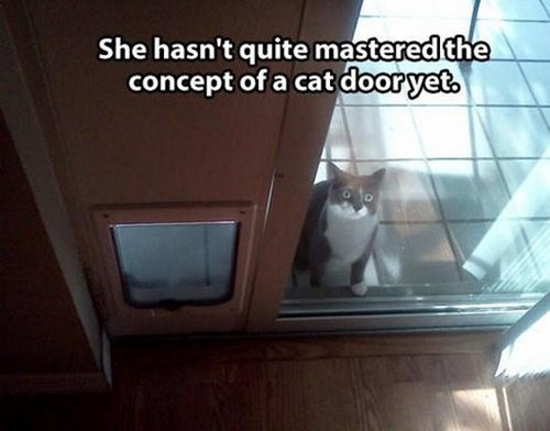 cat door,begging,Cats