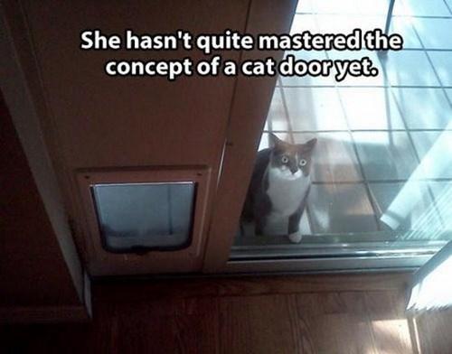 cat door begging Cats - 7856350976