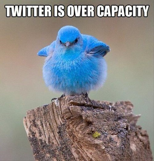 Mountain Bluebird - TWITTER IS OVER CAPACITY
