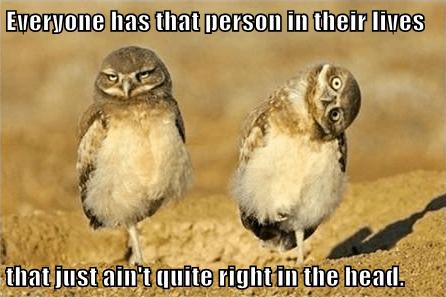 owls - 7856412672