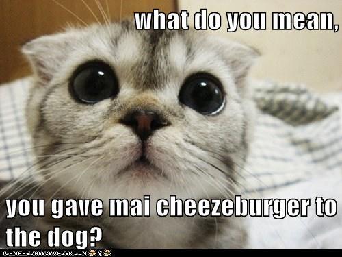 Cheezburger Image 7856415744
