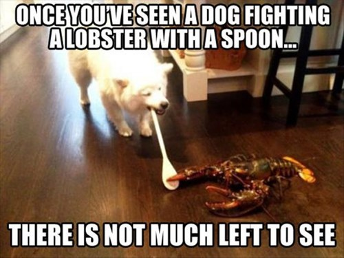 spoon,dogs,lobsters,delicious