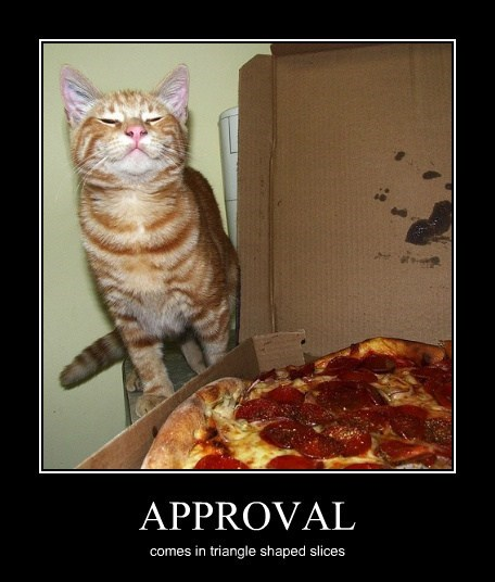 anchovies approval pizza Cats