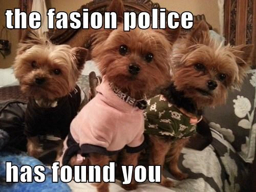 dogs bone fashion police cute