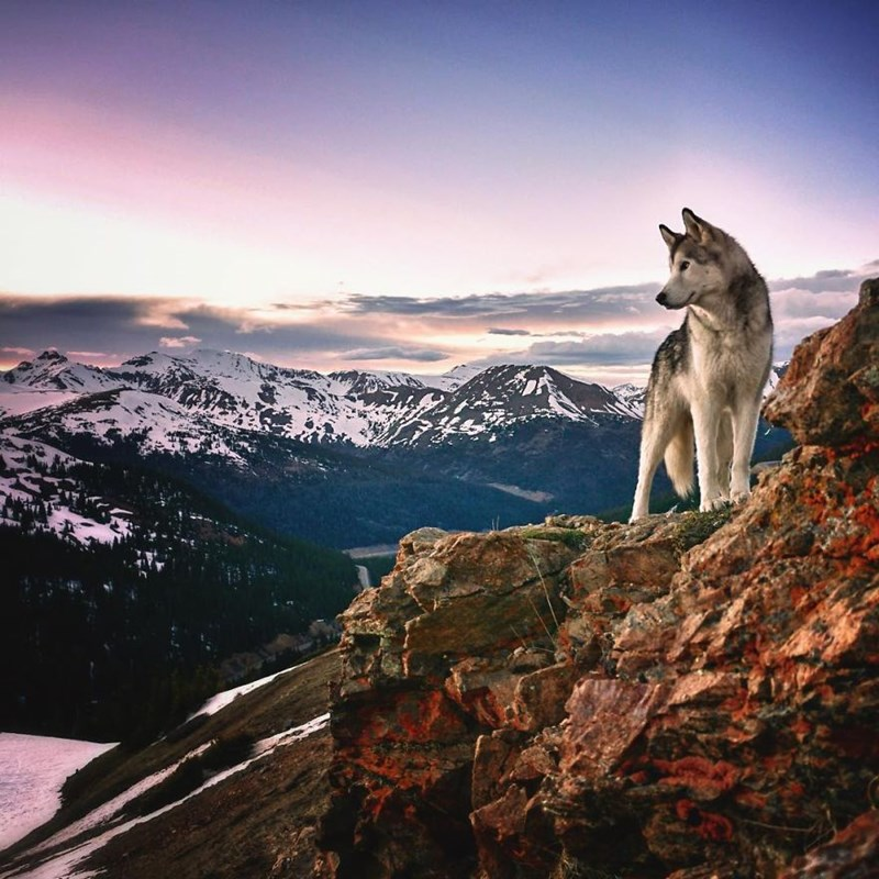 Man Takes His Beloved Wolf Dog on Epic Outdoor Adventures