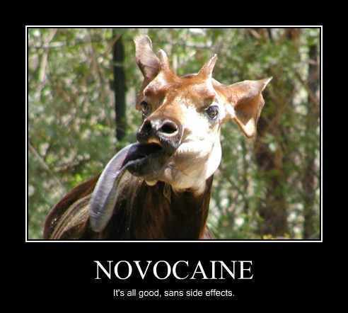 numb dentist drool novacaine deer - 7857052160