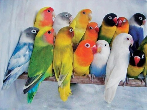 birds cute feathers colorful
