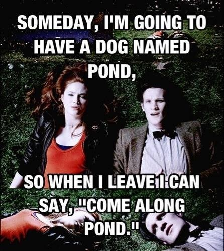 dogs pets doctor who amy pond - 7857551360