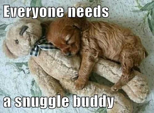 teddy bear snuggle puppies cute - 7857709056