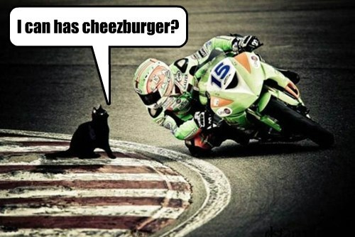 cheezburger race motorcycle Cats