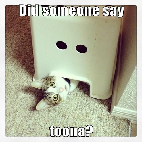 Did someone say  toona?
