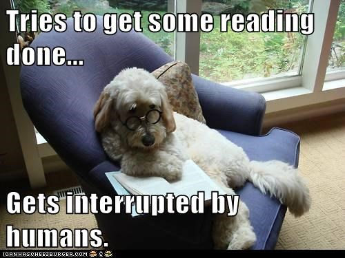 annoyed dogs reading book - 7857879552
