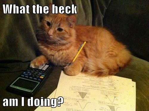 cute calculator Cats math - 7857908480