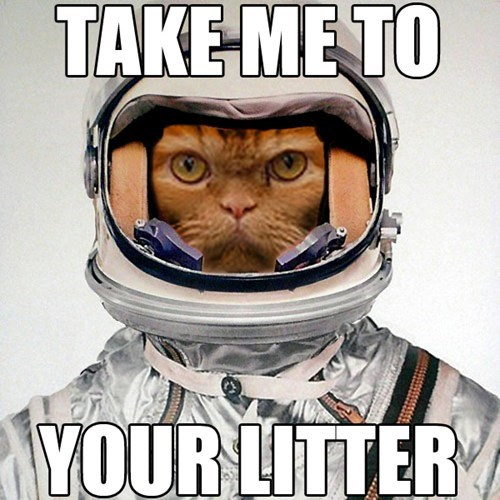 Catstronaut.