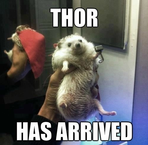 Photo caption - THOR HAS ARRIVED