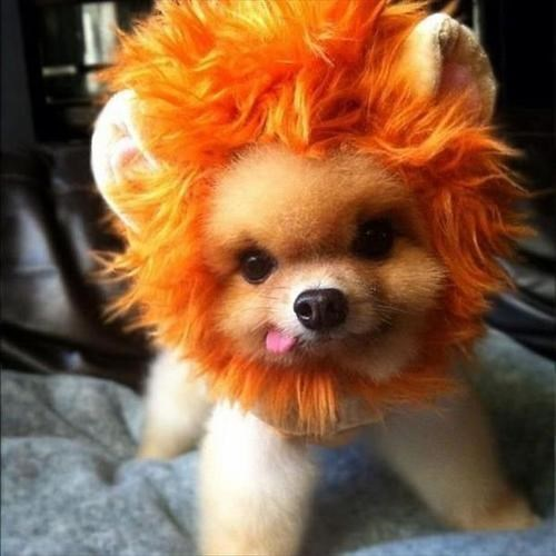 costume dogs puppies cute squee - 7858036992