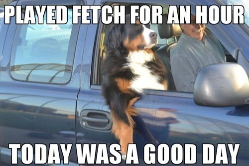 fetch,dogs,car,chill