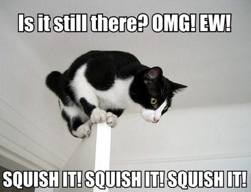 balance squish Cats - 7858051584