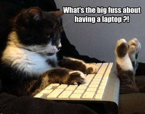 laptop Cats keyboard - 7858111744
