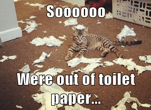 toilet paper,mess,Cats