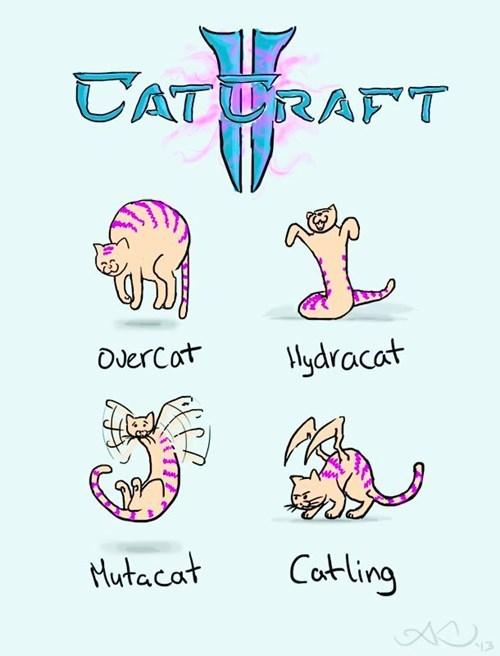 starcraft Cats web comics - 7858313728