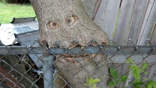 trees halloween spooky funny - 7858525696