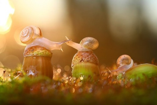 snails,autumn,cute,acorn