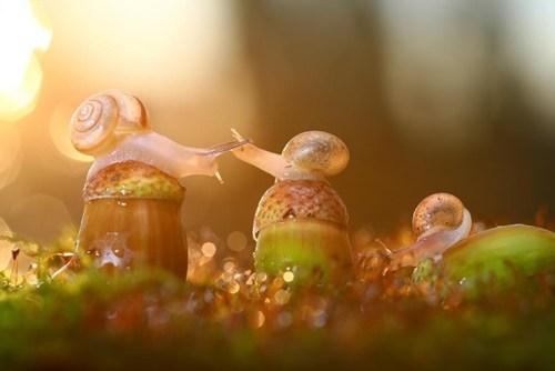 snails autumn cute acorn - 7858571520