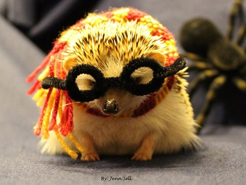 costume,Harry Potter,halloween,cute