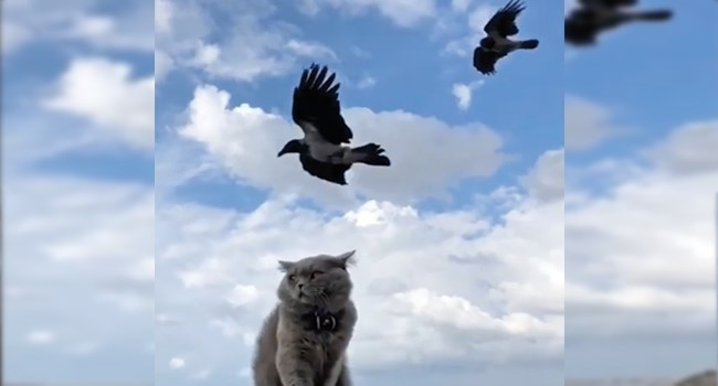 aww videos instagram cute cats funny cats Cats - 7859205