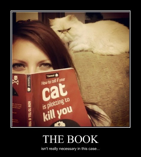cat book plotting funny - 7859336960