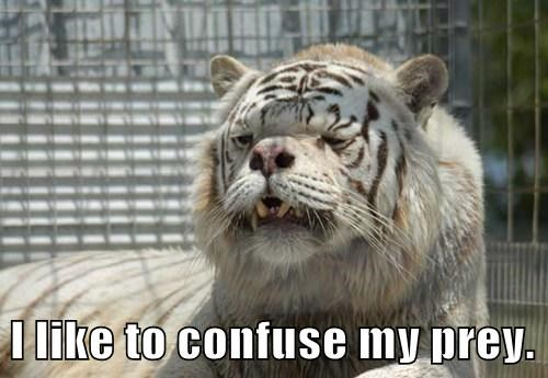tigers,confused,weird