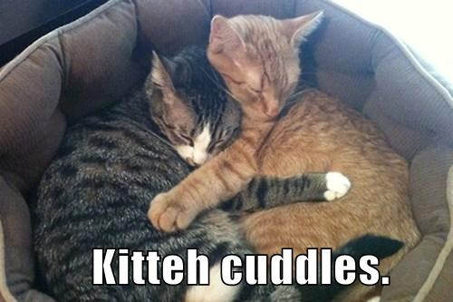 cuddle love Cats sleeping