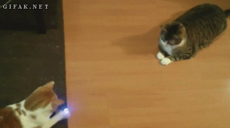 Kitty Laser Pong