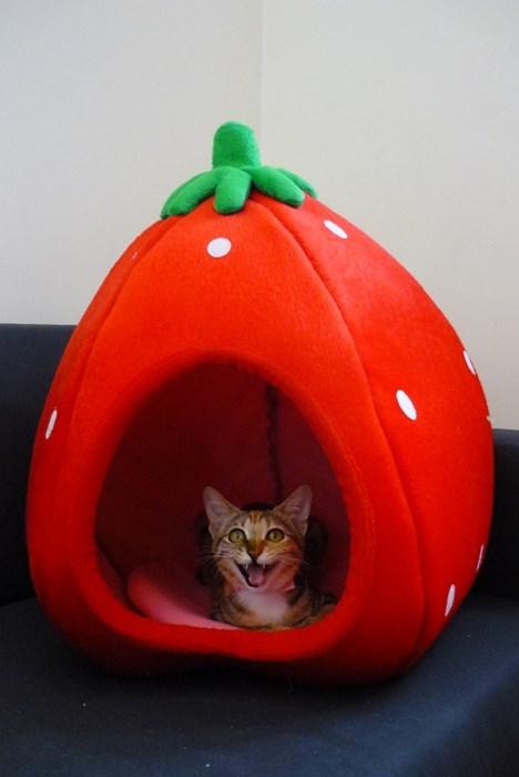 beatles strawberries cute Cats - 7859510016