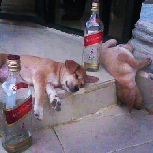 dogs crunk critters whisky funny - 7859525888