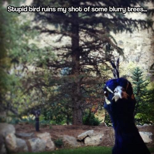 focus trees birds Photo - 7859547136