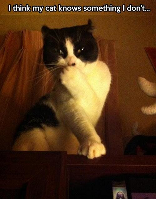secret cute Cats - 7859557888