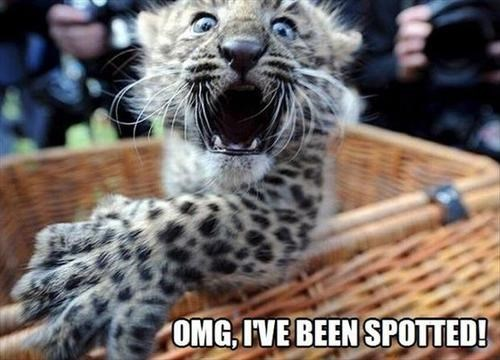 spotted puns cute leopards