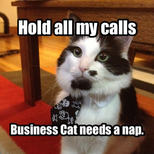 nap Business Cat calls mouse - 7859651840